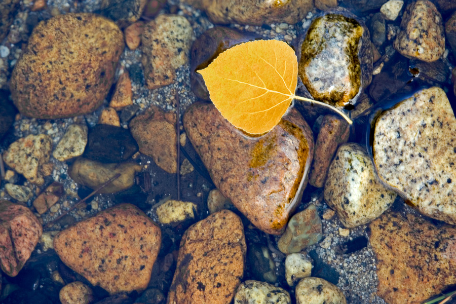 Leaf Rocks and Water