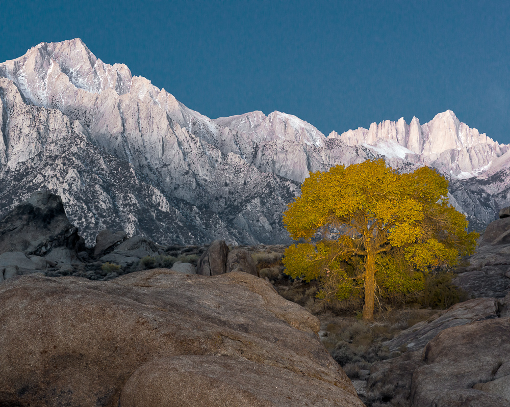 Sunrise and Lone Tree in Alabama Hills #3 (•)