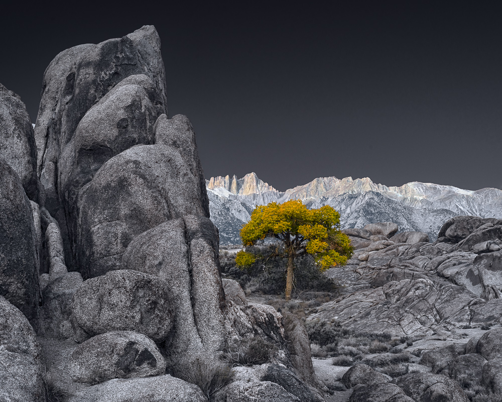 Sunrise and Lone Tree in Alabama Hills (•)