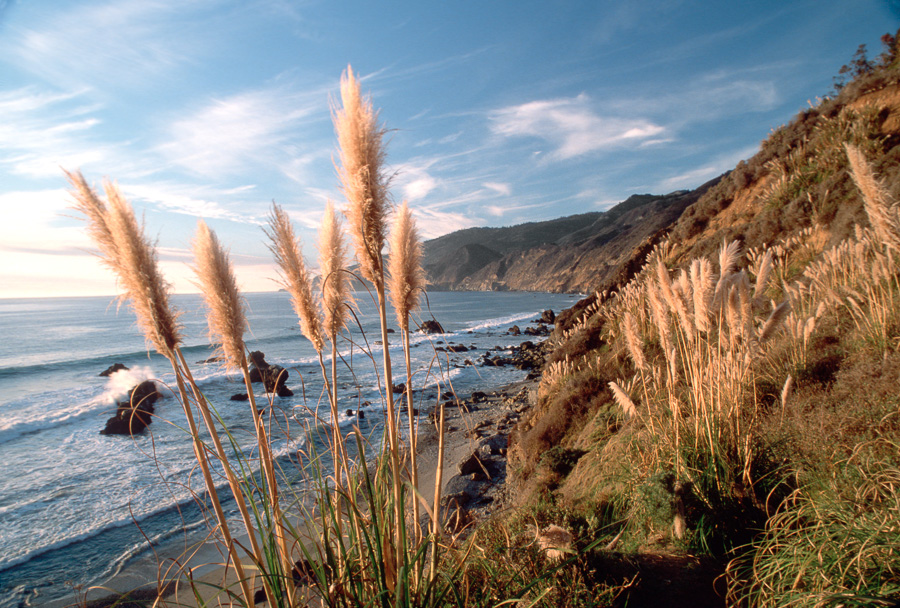 Big Sur Grasses