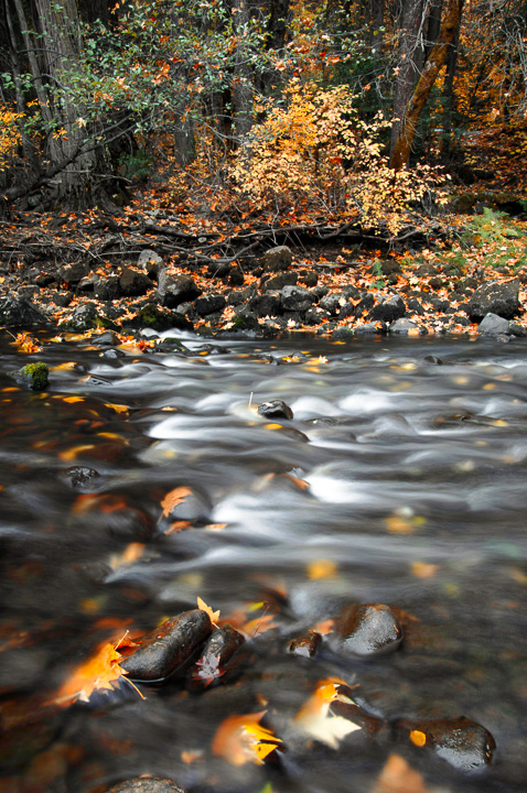 Autumn on the Merced (LE)