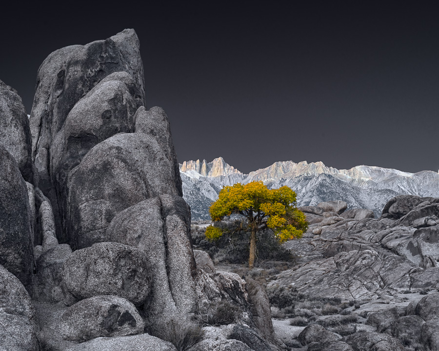 Sunrise and Lone Tree in Alabama Hills, Autumn (•)
