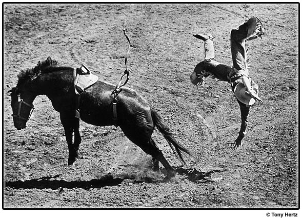 Ride 'em Bronco horse bucks with help of strap tightened around where it hurts to make it buck the rider.