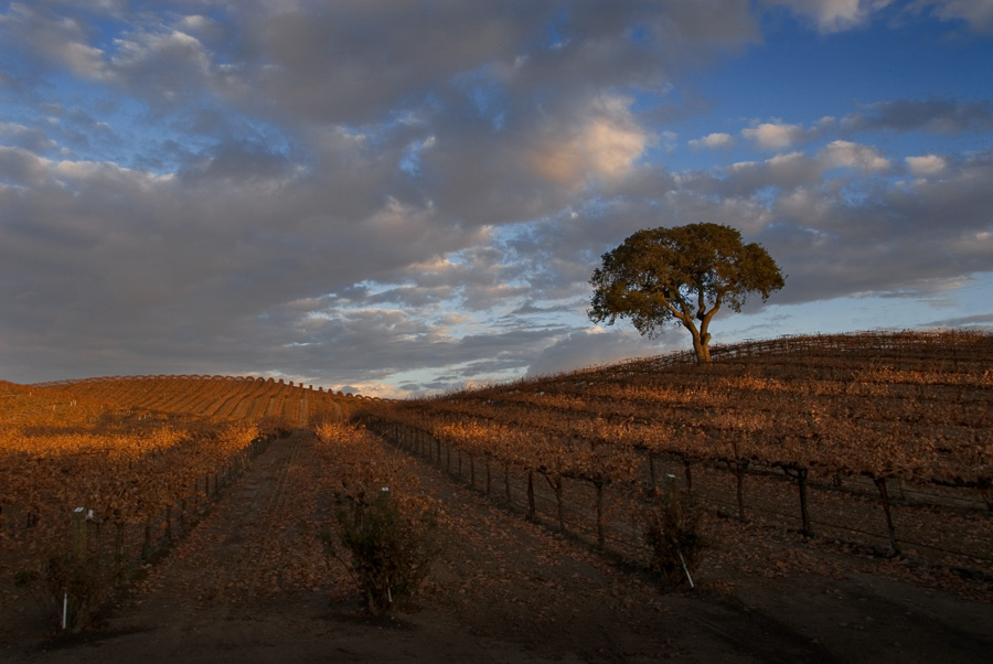 Paso Robles Vineyard 2