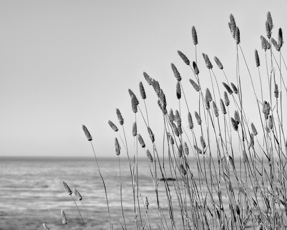 Sea Grasses No. 2 (•)
