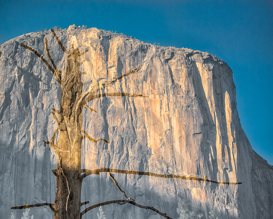 Bare Tree and El Capitan (•) (in-camera double exposure)