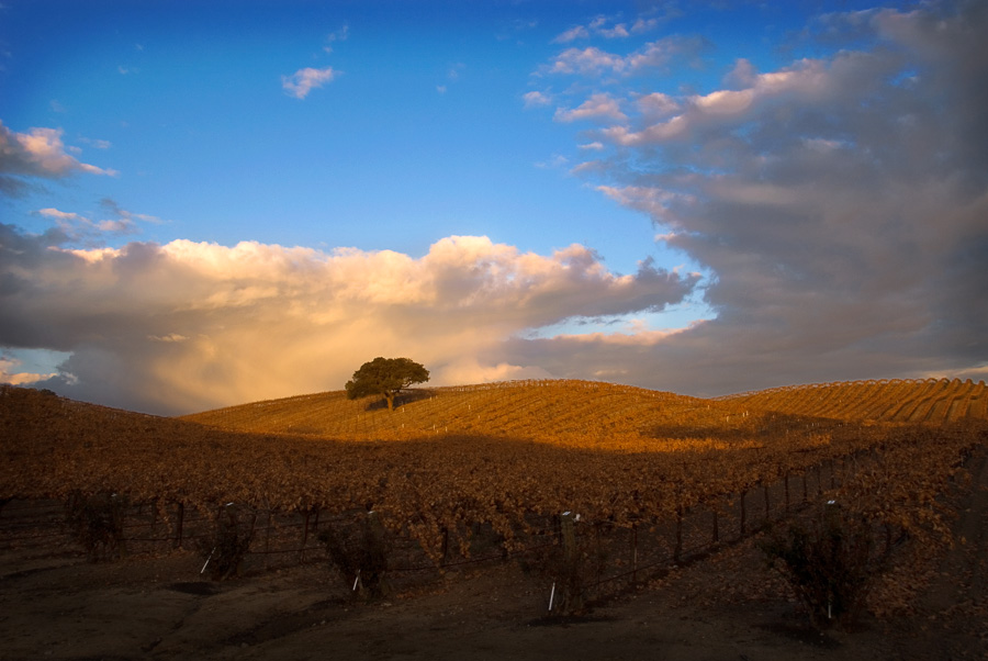 Paso Robles Vineyard Skyline